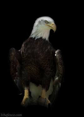 eagle 2-2